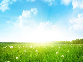summer-health_768x576
